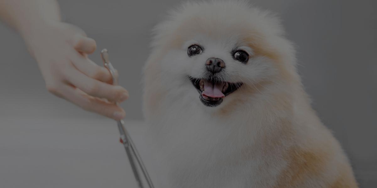 dog haircuts article april costigan mar 05 2021 header image