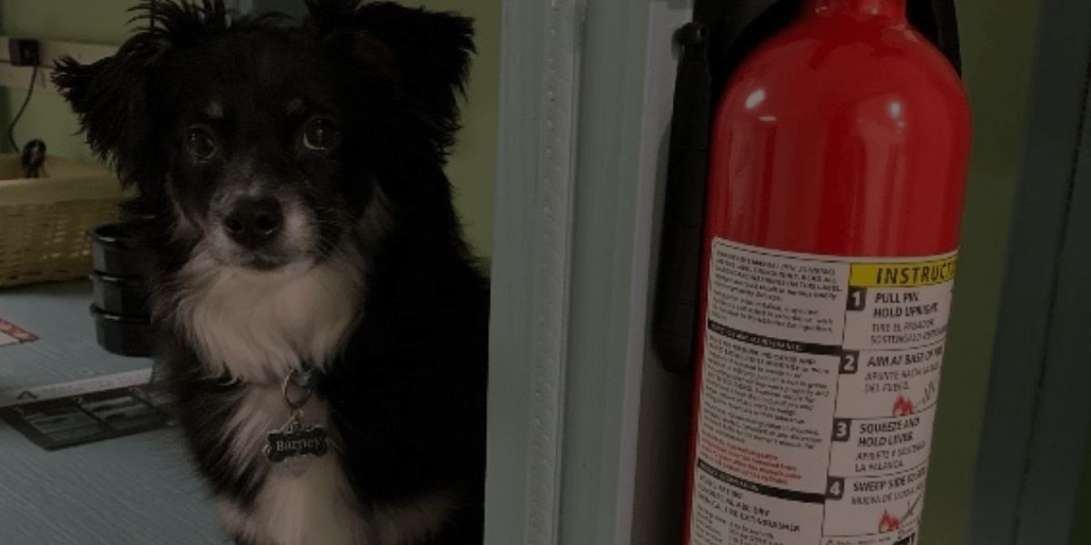 Working in a Dog Grooming Salon: 3 Critical Safety Tips