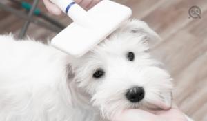 groomer brushing dog with slicker brush