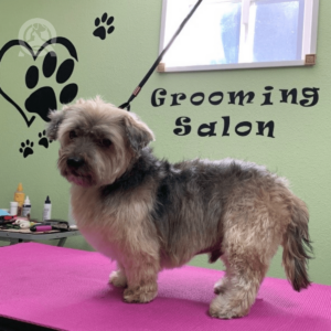Spike after dog grooming appointment