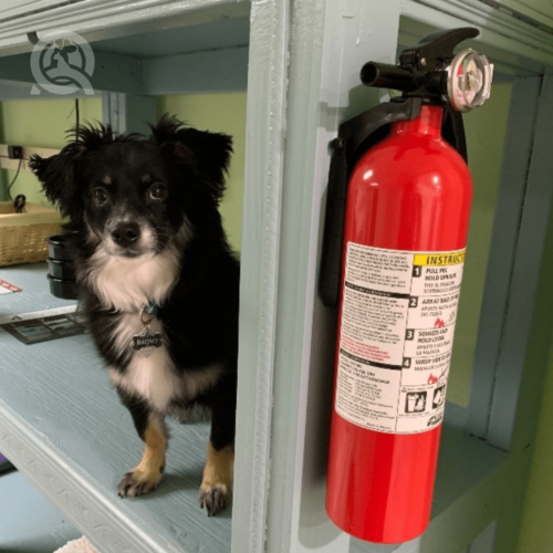 Dog next to fire extinguisher