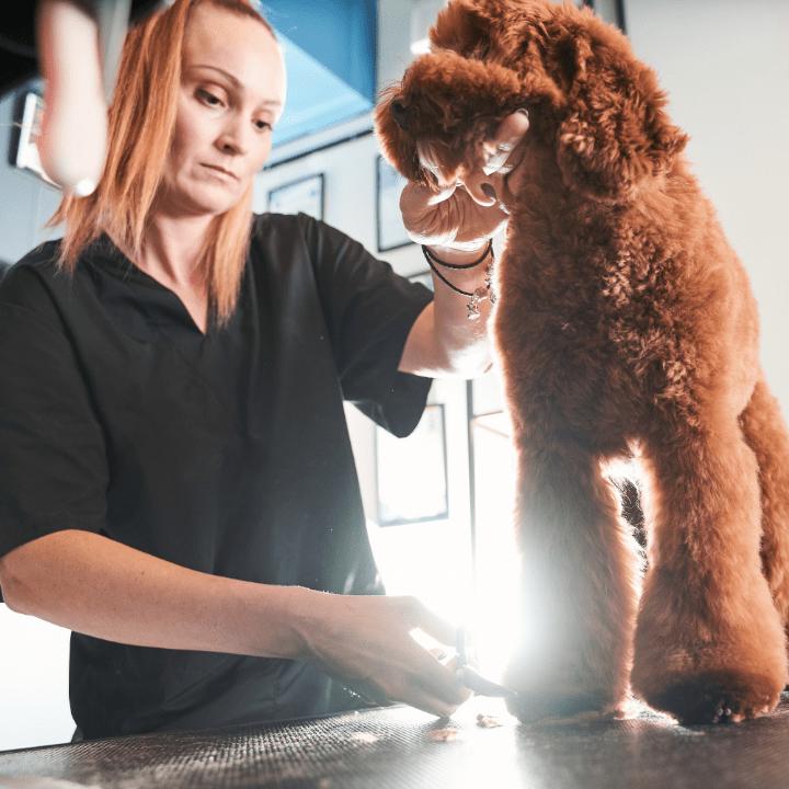 QC Pet Studies article, Apr 16 2021, Feature Image