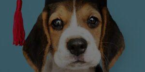 Dog grooming school cost article Header Image, dog wearing graduation cap