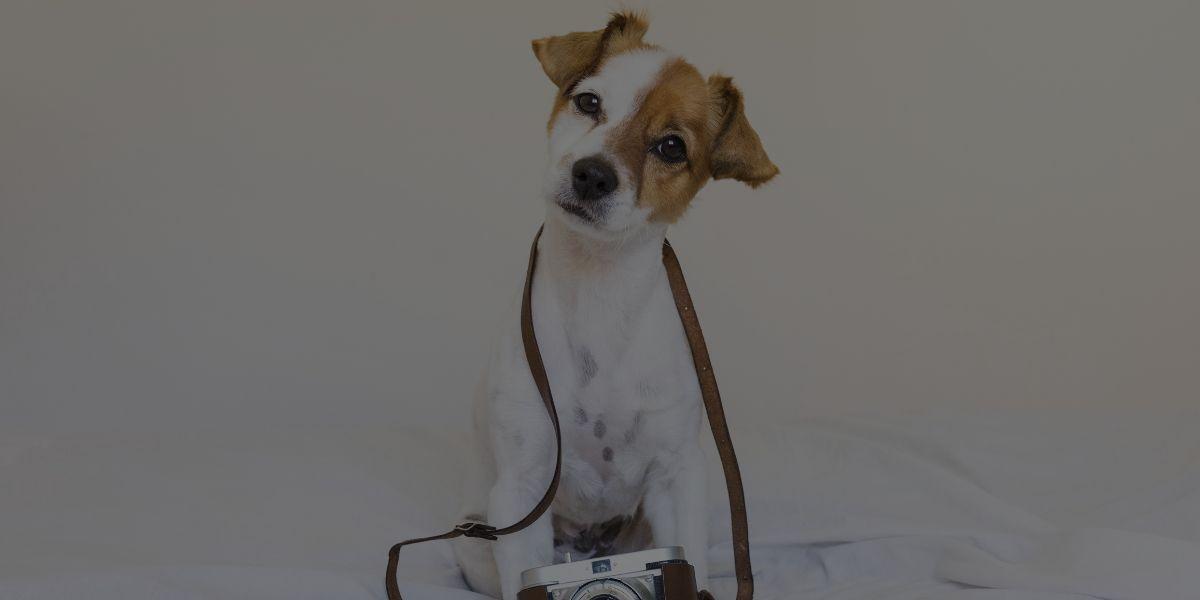 5 Ways to Market Your Dog Grooming Portfolio
