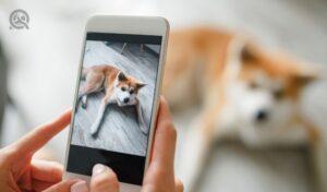 Dog grooming portfolio blog in-post image