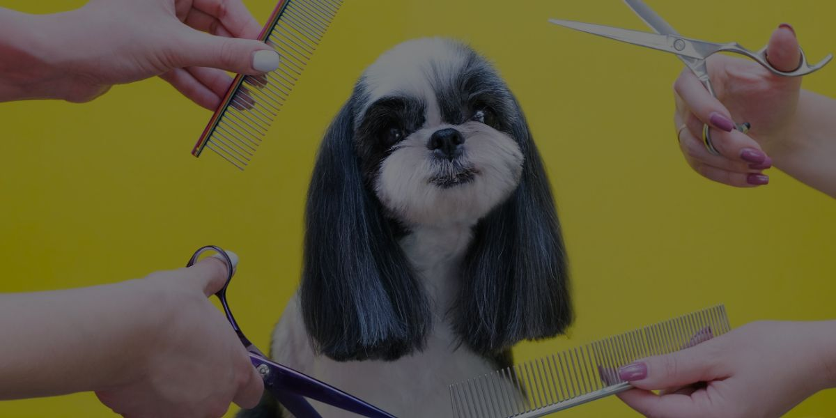 How to Run a Thriving Dog Grooming Business After COVID!