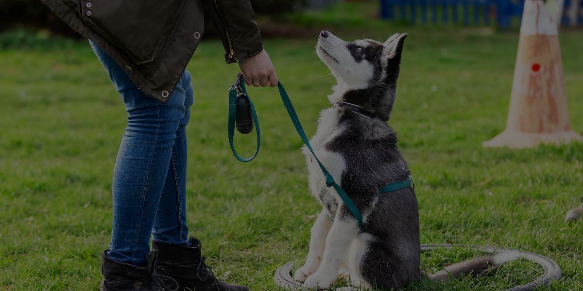 Increasing Your Groomer Salary Post-COVID: Dog Training