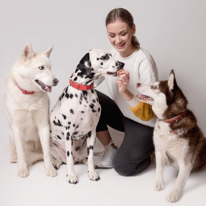 Dog training quiz, July 30 2021, Feature Image