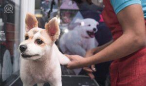 Dog groomer trimming dog's back paw