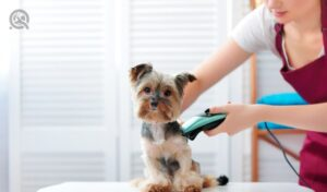 QC Pet Studies Sept promo article in-post image 2