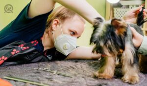 Groomer makes shearing of Yorkshire Terrier by scissors. hairdresser pet and pet hair care specialist. extras at the pet store